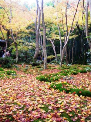 嵐山祇王寺の紅葉